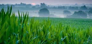 Iowa Farm Field